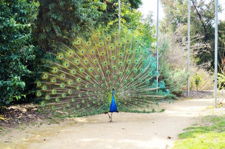 Un paseo gratis y rodeado de naturaleza enLA